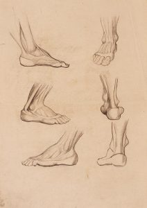 Anatomija stopala : študija