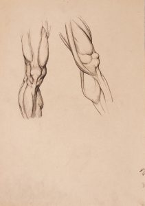Anatomija nog : študija